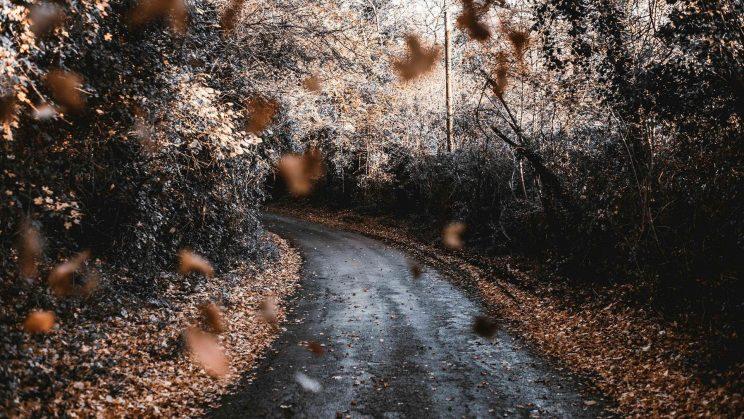 Road in woods