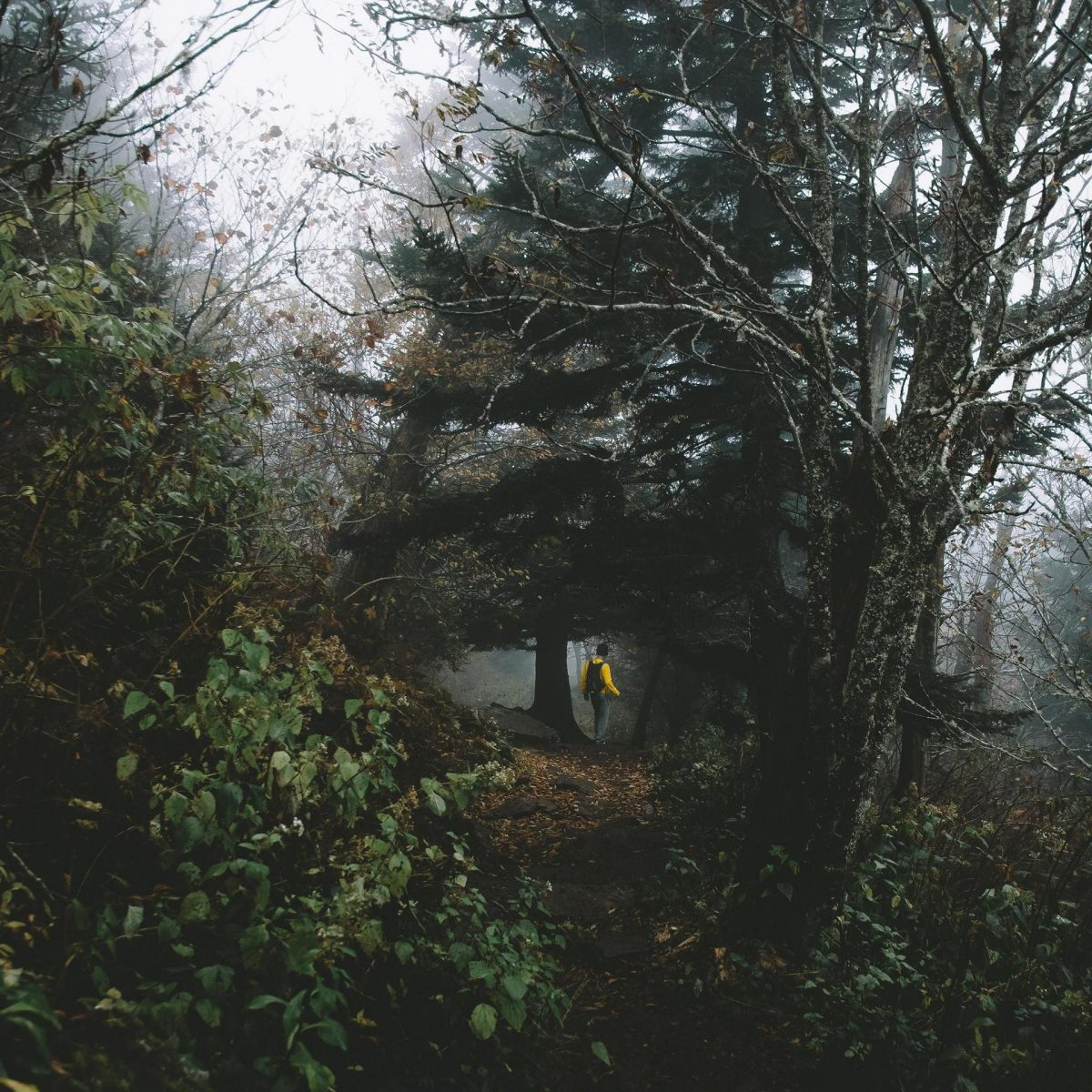 Hiking in woods